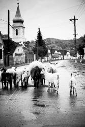 Fotoreis Roemenie