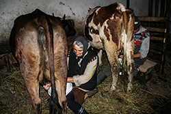 boeren aan het werk  in het dorp